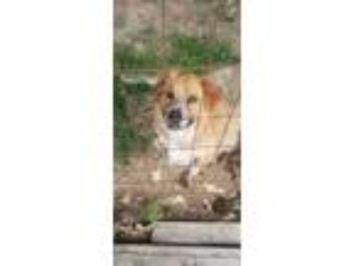 Adopt Bruno JS in MS a Feist
