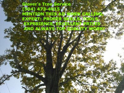 Tree service, trimmings, weight reduction, crowning, removals & more. Glover's Tree Service