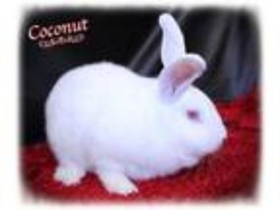 Adopt Coconut a New Zealand