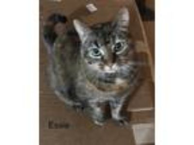 Adopt Essie a Brown Tabby Domestic Shorthair cat in Lawrenceville, GA (25063100)