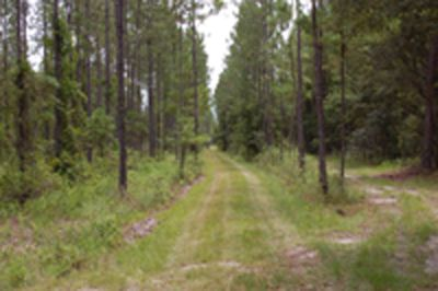 Land for Development in Melrose, Florida, Ref# 1514285