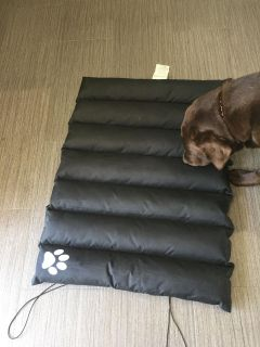 Roll up dog bed