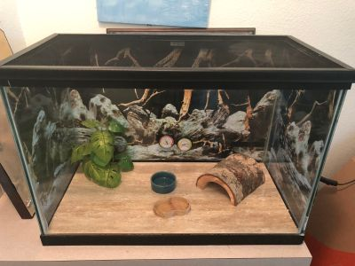 Bearded dragon tank and accessories