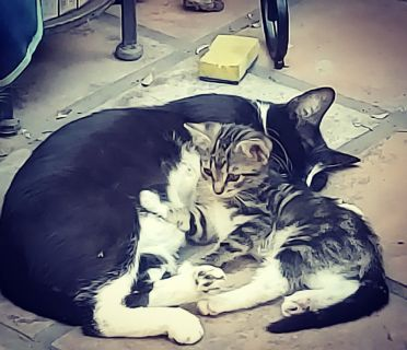 Momma Cat and 3 kittens. 1 male, 2 female.