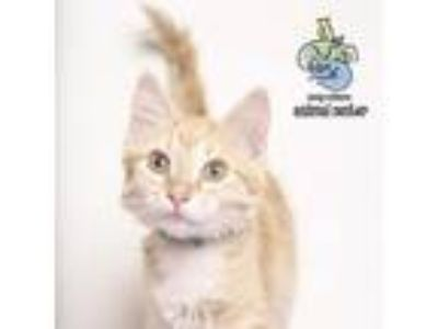 Adopt Waverly a Orange or Red Domestic Shorthair cat in Knoxville, TN (25294656)