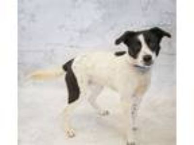 Adopt Pen 206 Bronco a Border Collie