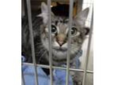 Adopt Luna a Domestic Medium Hair