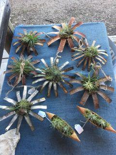 Live Air Plants