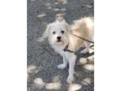 Adopt Gretta a Tan/Yellow/Fawn Terrier (Unknown Type, Small) / Mixed dog in