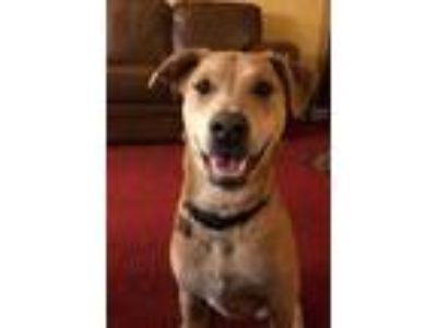 Adopt Elizabeth a Tan/Yellow/Fawn Retriever (Unknown Type) / Mixed dog in West