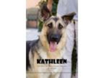 Adopt Kathleen a German Shepherd Dog