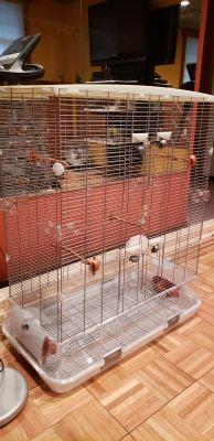 Visions big bird cage