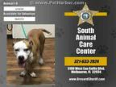 Adopt ZEUS a Tan/Yellow/Fawn - with White Mixed Breed (Medium) / Mixed dog in
