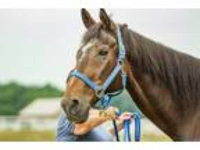 Adopt Modest Mouse a Thoroughbred