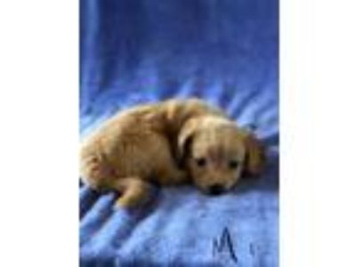 Adopt Jace a Tan/Yellow/Fawn Mixed Breed (Medium) / Mixed dog in Jeffersonville