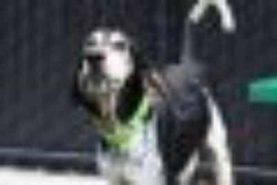 Shine Hound - Mixed Breed Dog