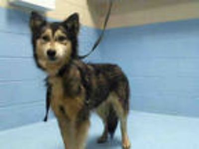 Adopt a Black - with White Husky / Mixed dog in Moreno Valley, CA (25297783)