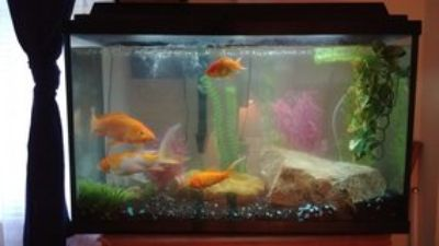 Fish tank, 2 Koi, 2 Goldfish, Large bag of food