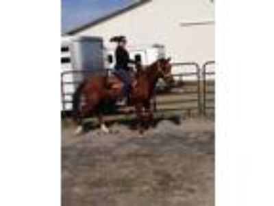 Registered Quarter Horse for Sale