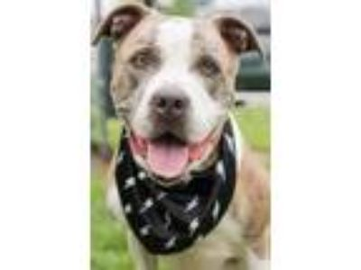 Adopt Gucci a Terrier, Mixed Breed