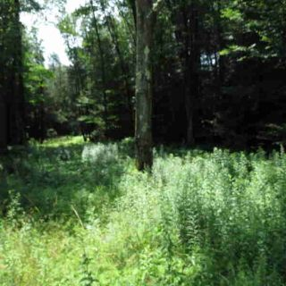 Roemerville Rd Greentown, Beautiful wooded lot on a State