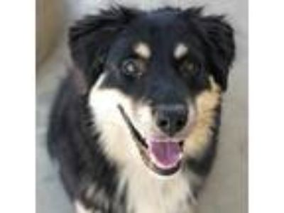 Adopt Apachie *Available Thursday 6/13 a Black Mixed Breed (Large) / Mixed dog