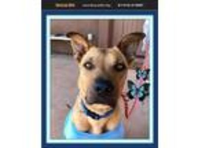 Adopt Copper M a German Shepherd Dog / Black Mouth Cur / Mixed dog in Cave