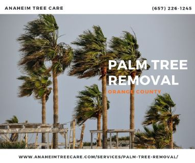 Palm Tree Removal Orange County