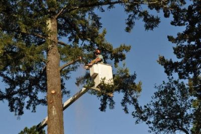 GIBBS Tree Service With Residential Tree Trimming