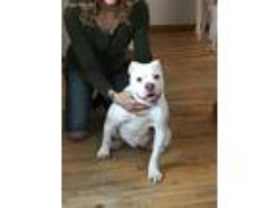Craigslist Animals And Pets Classifieds In Montgomery Vt Claz Org