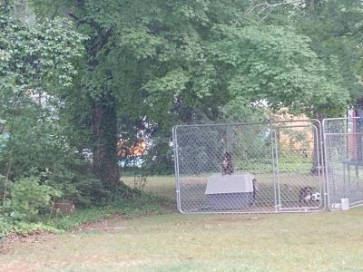 Outdoor kennel dogs not included