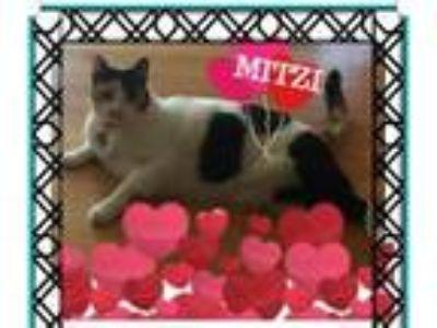 Adopt Mitzi a Calico or Dilute Calico Calico cat in San Jose, CA (25605202)