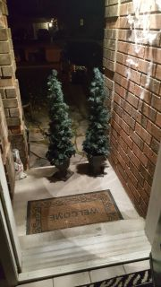 2 outdoor Christmas trees