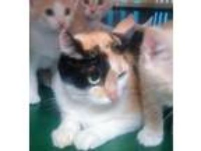 Adopt Queen Frostine a Calico
