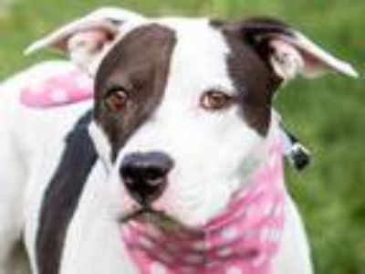 Adopt Lilly a Black Mixed Breed (Large) / Mixed dog in Longmont, CO (23898775)