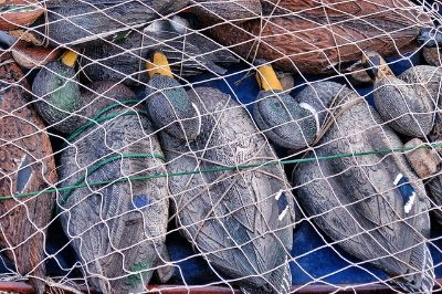 Duck Decoys Floaters For Sale