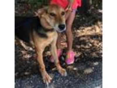 Adopt Geneva a Hound (Unknown Type) / Mixed dog in Whiteville, NC (25338561)