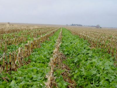 To Increase Soil Productivity Use Cover Crop Seed by Forage Complete