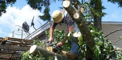 Anderson Tree Service