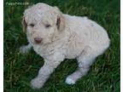 Craigslist Animals And Pets For Adoption Classifieds In