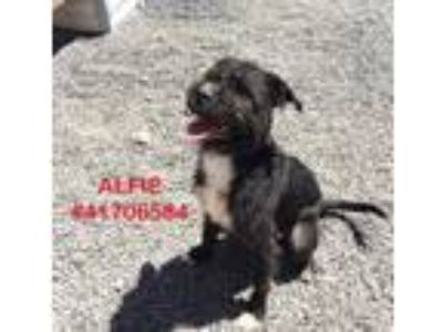 Adopt Alfie - stray a Black Terrier (Unknown Type, Small) / Mixed dog in Wilkes