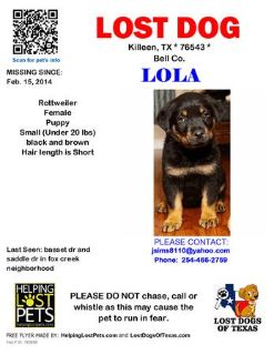 Lost Puppy (killeen)