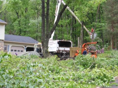 CT Tree Services
