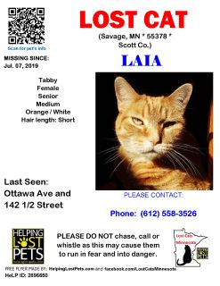LOST STRIPED ORANGE CAT