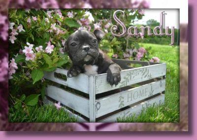 Sandy Female Frenchton