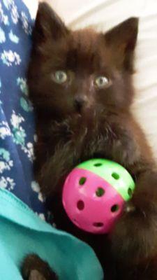 9 wk. Male kitten needs a good home