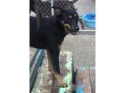 Adopt Basia a Black Mixed Breed (Medium) / Mixed dog in Charleston