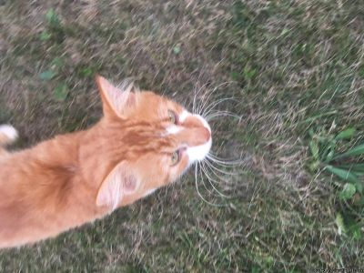 Male cat needs a good home