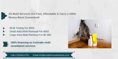 Mold exposure test - mold services