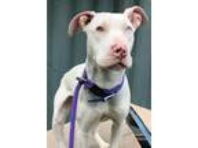 Adopt Serena BLue Eyed Deaf Girl a White Terrier (Unknown Type